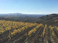 Brunello di Montalcino vineyards