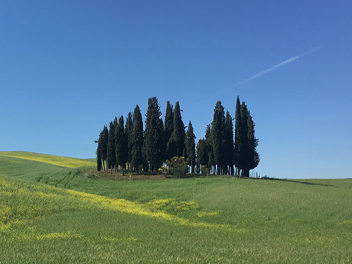 Cypress trees between San Quirico d'Orcia and Montalcino, i cipressi di Casaltina