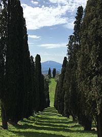Villa Poggio Manzuoli, cypress lane